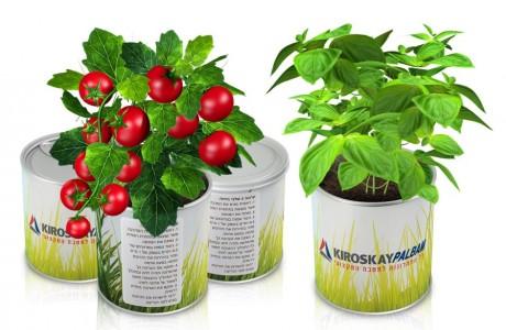גינת תבלינים בפחית ממותגת